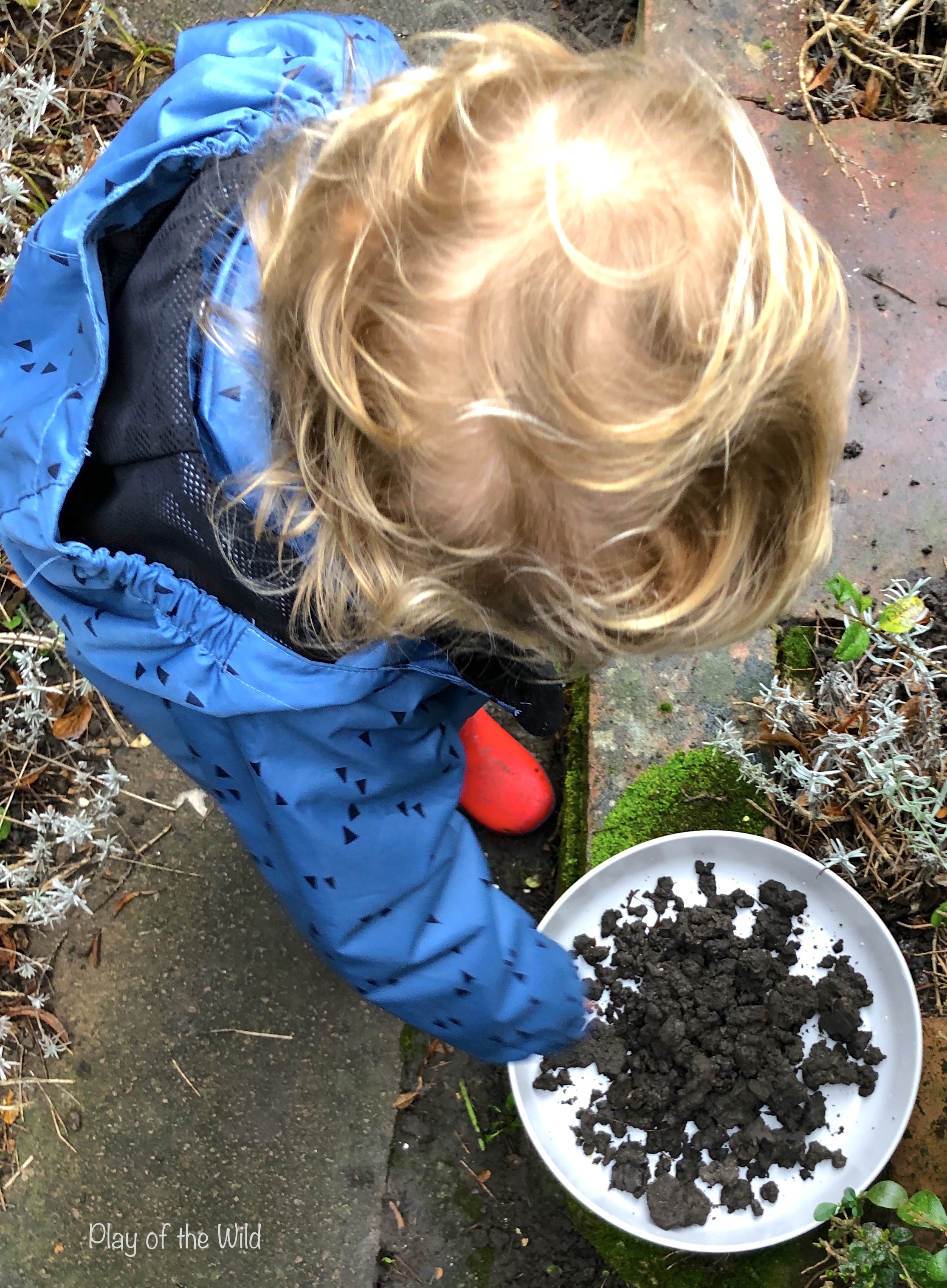 finding worm castings dirt. Sowing & Spreading Wild Flowers with Seed Bombs.