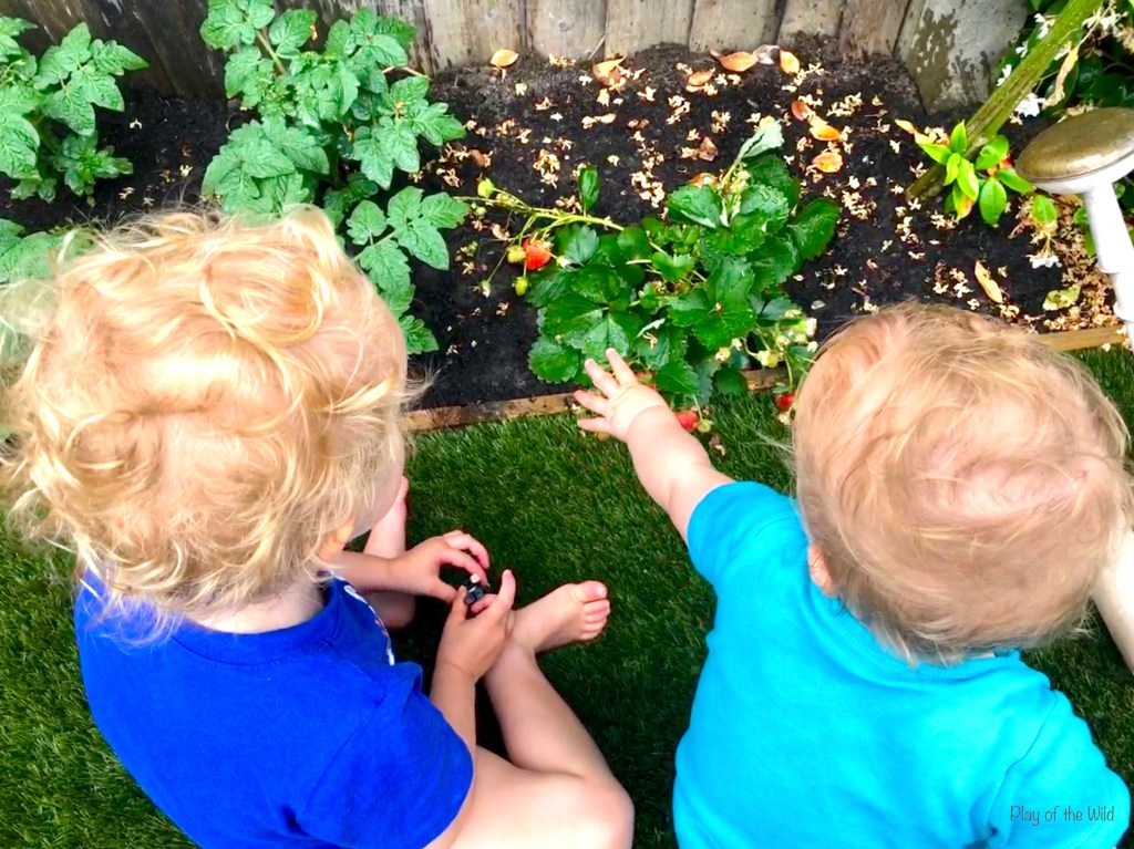 How to make and plant a garden for kids.  Growing strawberries with children.