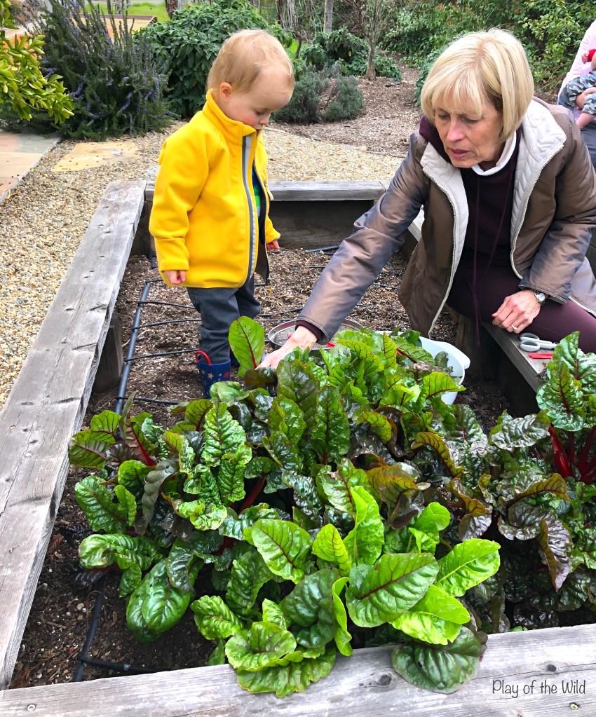 How to make a vegetable garden for kids.  Raised bed vegetable garden.