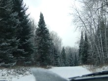 Snowy trees and forest service road. Perfect Christmas trees everywhere.