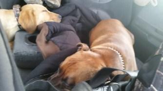Sleepy pups on the way up.