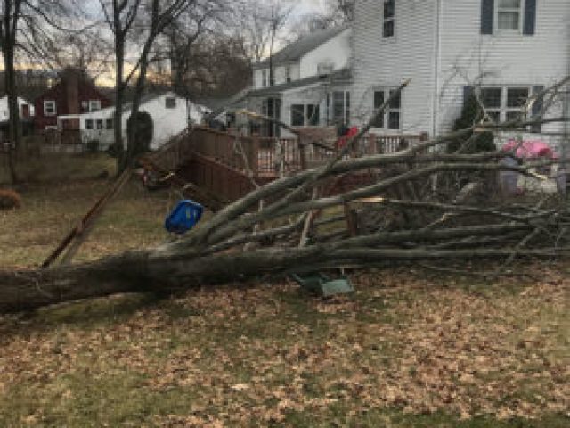 Playset Destroyed by Tree