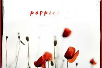 Poppies The Space