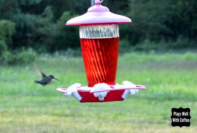 Hummingbird 3.5