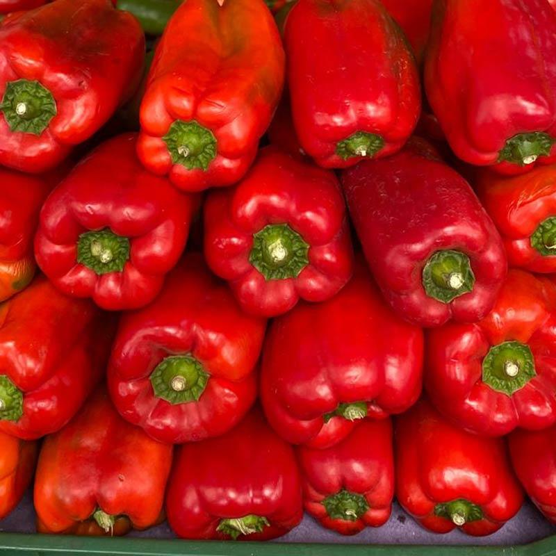 pimenton-rojo-lb-paloquemao
