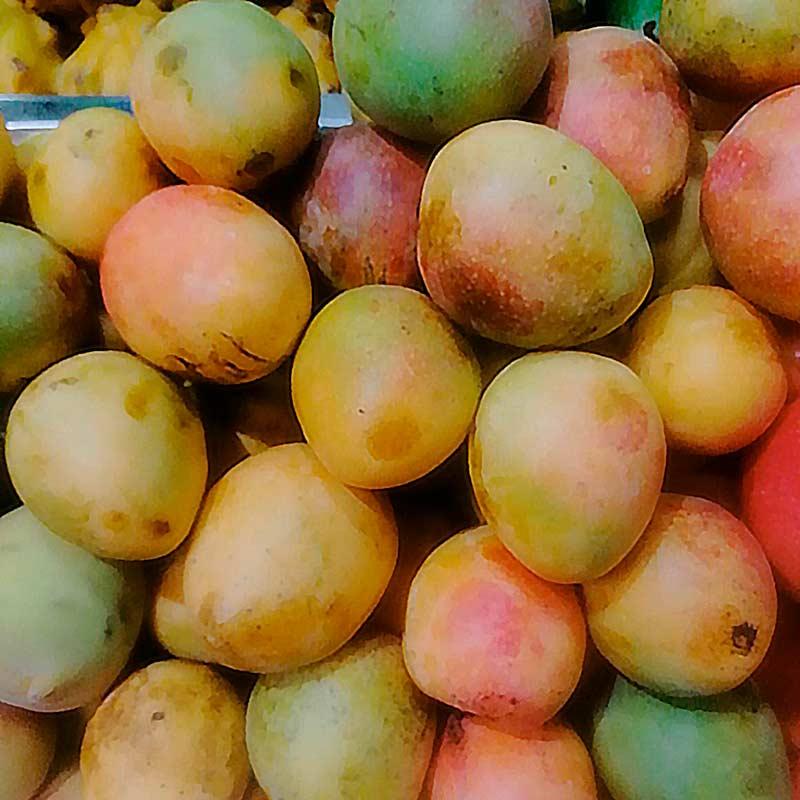 mango-de-azucar-lb-paloquemao