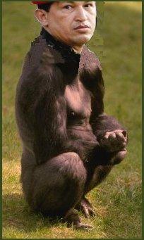 gorila rojo