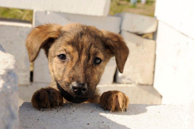 Rescue Koira Kokemuksia