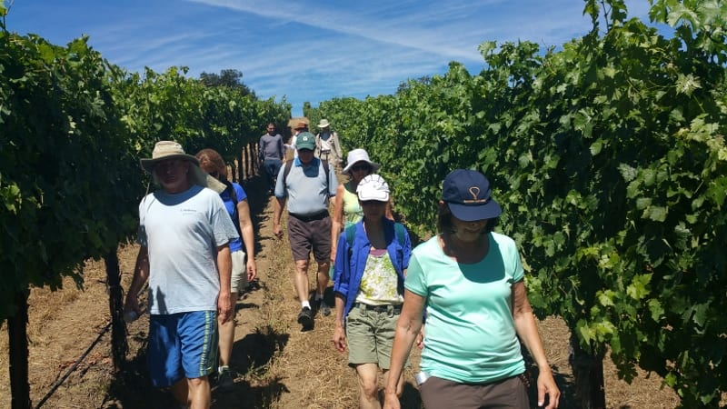 Hiking in the Wine Country - Franconian Wine Country |Hiking Wine