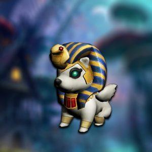 pet_baby_sphinx