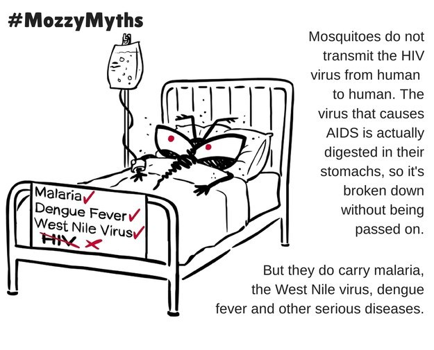 Mosquitos as a Vector of Human Immunodeficiency Virus (HIV