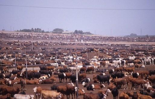 beef sustainability