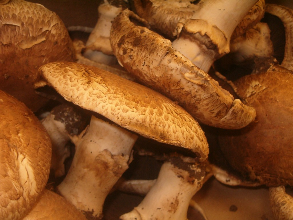 Tryptophan: Mushroom