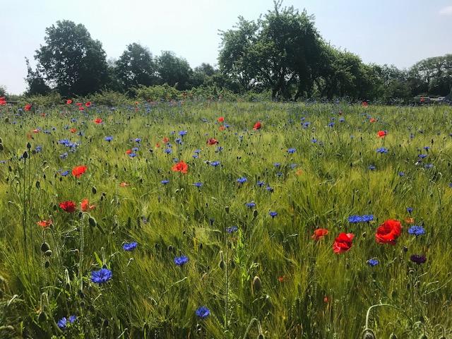 Do weeds matter for biodiversity?