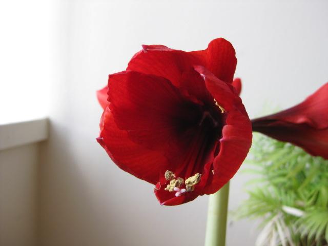 2009_03_22_flower1