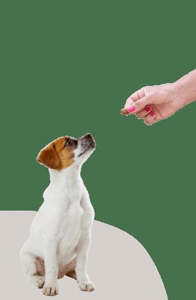 dog feed treat
