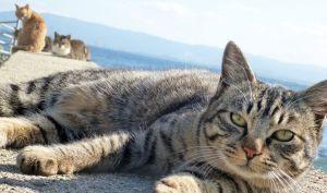フェリシモ猫部を知っていますか