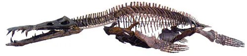 Liopleurodon ferox skeleton