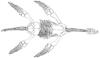 plesiosaur logo