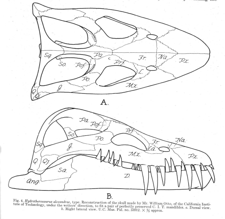 Hydrotherosaurus Plesiosaur Directory