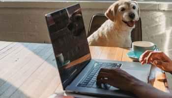 faceless black lady working remotely on laptop near dog