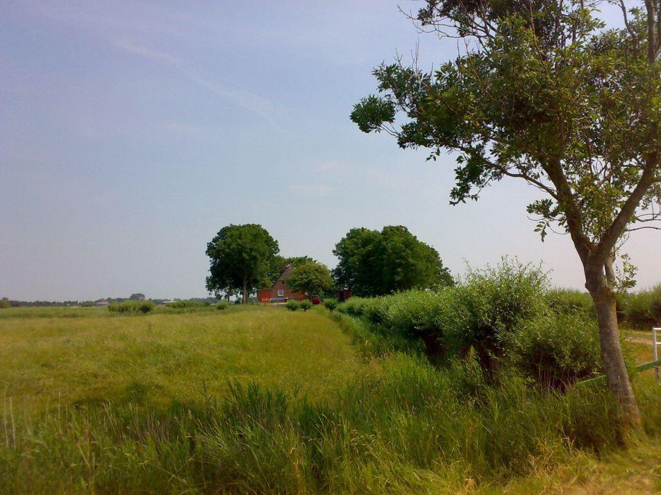 Die Weidenwarft