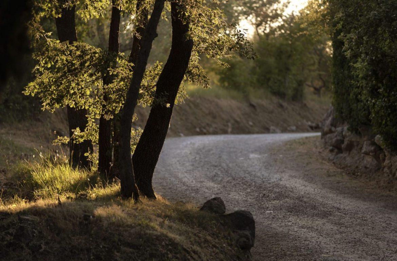 pelerinaj către Camino