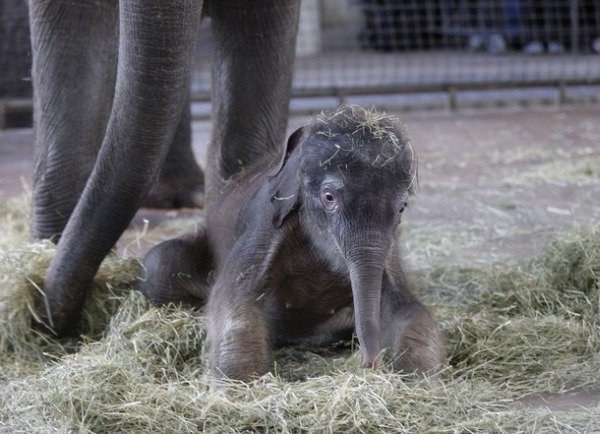 Baby Elephant Ko Raya - Photo courtesy of demonicious.com