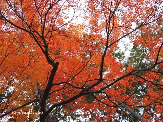 Autumn Colors - Kyoto Japan