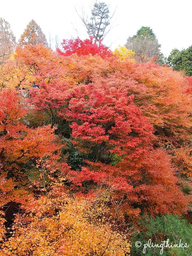 Tofuku-ji Maple Trees - Kyoto Japan