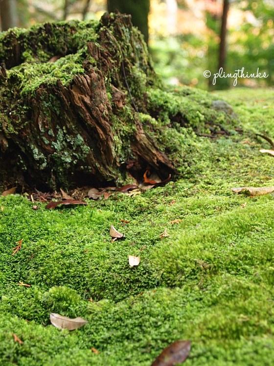 Carpet of Moss - Garden in Saihoji Kyoto
