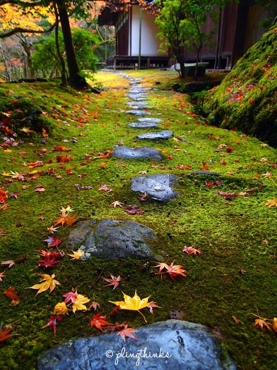 Stone Maple Leaves Moss Autumn - Saihoji Kyoto