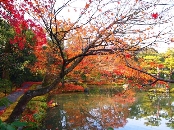 Autumn at Golden Pavilion Temple - Kinkakuji Kyoto