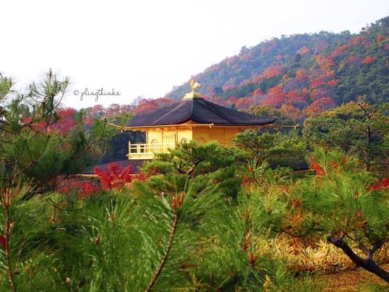 Autumn Colors Kinkaku-ji Gold Temple - Kyoto Kinugasa Mountain