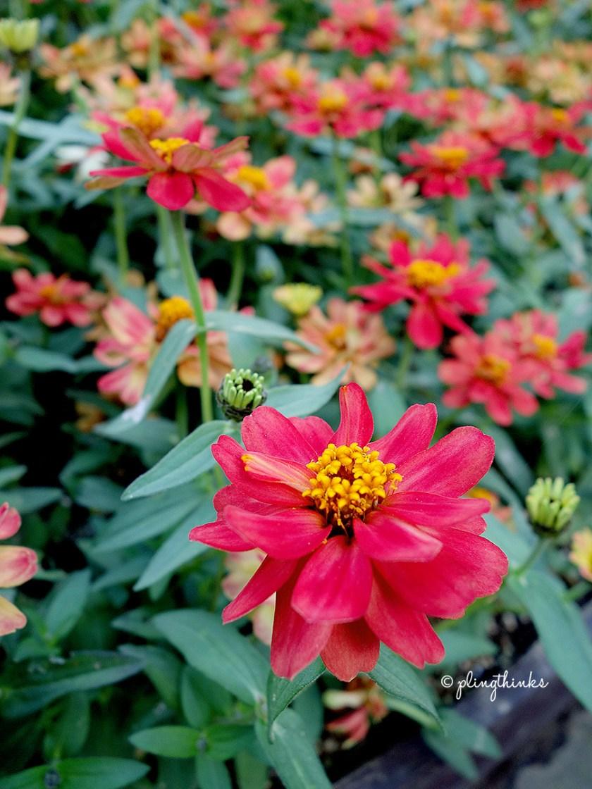 Nunobiki Herb Gardens Kobe Autumn Flowers - Japan
