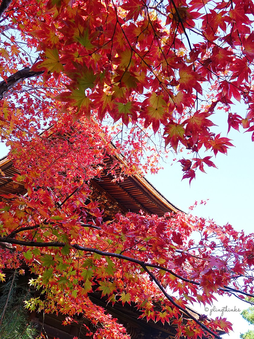 Autumn Maple Leaves at Jojakko-ji Temple - Kyoto Arashiyama