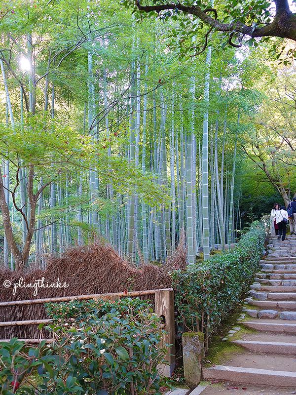 Bamboo Garden in Jojakko-ji Temple - Kyoto Arashiyama