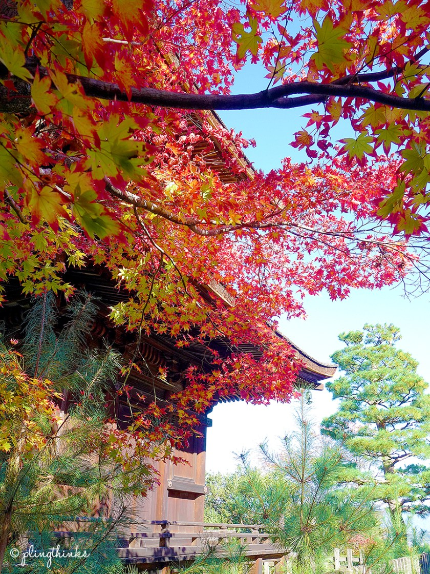 Jojakko-ji Maple Leaves turning red - Kyoto Arashiyama