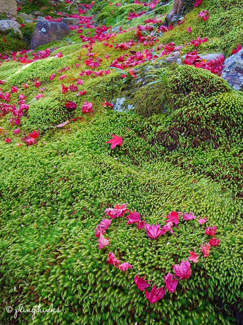 Jojakkoji Temple Kyoto Arashiyama - Autumn Maple Heart on Moss