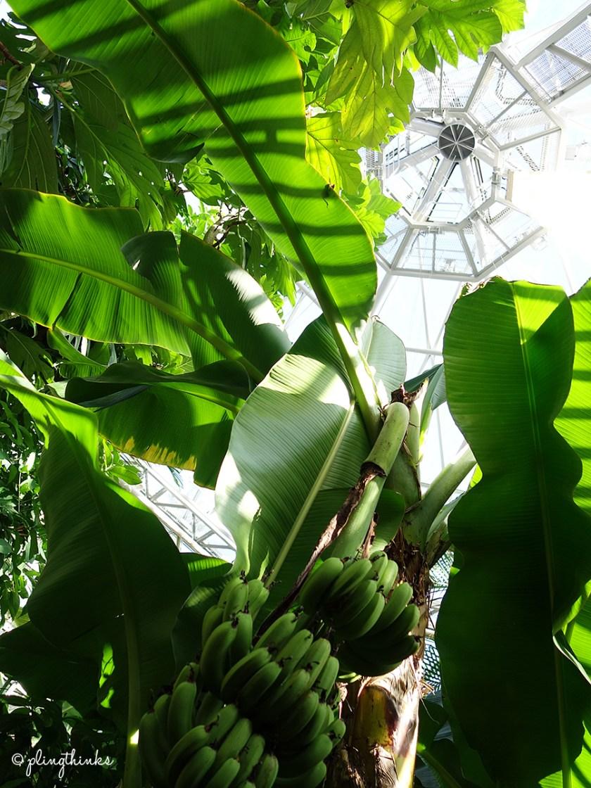 Nunobiki Herb Gardens Kobe - Tropical Forest Glasshouse