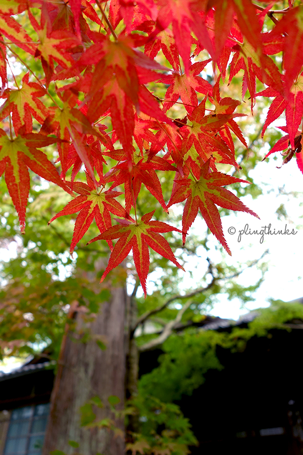 Tenjuan Garden Maple Leaves - Nanzenji Autumn