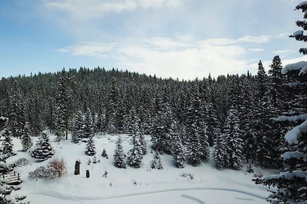 Winter-trees-views-352248-Pine-Ridge-Road-Bragg-Creek-Ranch-Acreage-For-Sale-Calgary-Real-Estate-For-Sale-taylor-sothebys-Realtor-Plintz