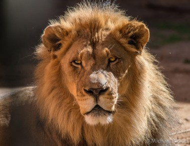 You're lion!
