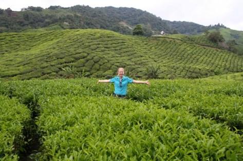 boh-tea-cameron-highlands-3