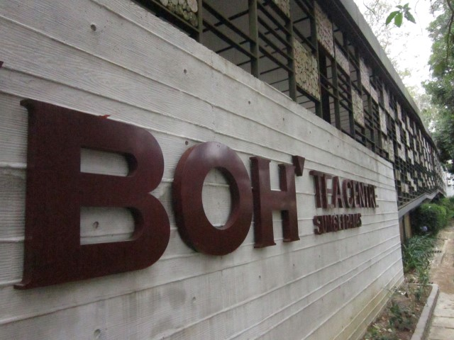 boh-tea-cameron-highlands-7