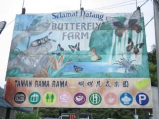 butterflyfarm