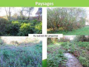 Zones Humides : autour de Languivoa