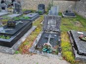 Exemple de plantation de cebum au cimetière de Questembert, 3 ans après