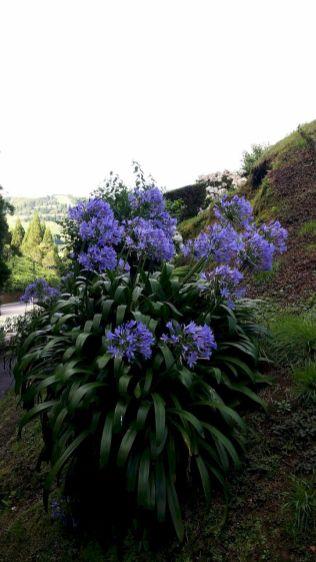 Açores REDUC-20190813_172047