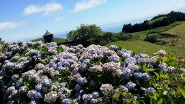 Açores REDUC-20190816_123105